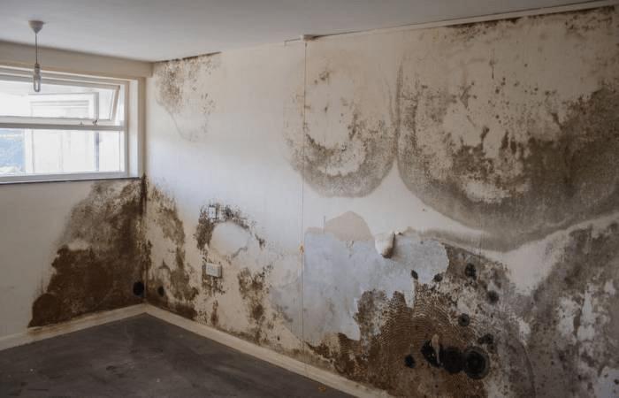 Tường ẩm mốc gây ra những ảnh hưởng xấu tới không gian và sức khỏe